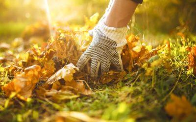 Sacs déchets verts : quelle utilité pour mon jardin ?